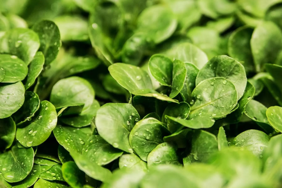 Found - The little surprise in leafy greens